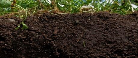virgin-soil.jpg